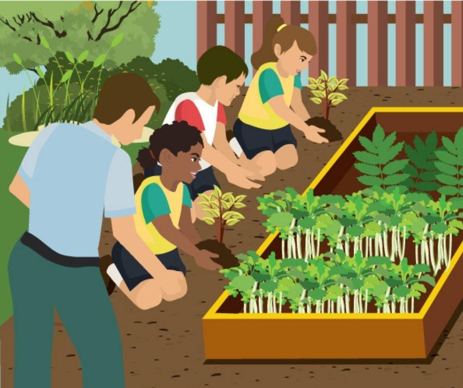 How to Create a School Garden program
