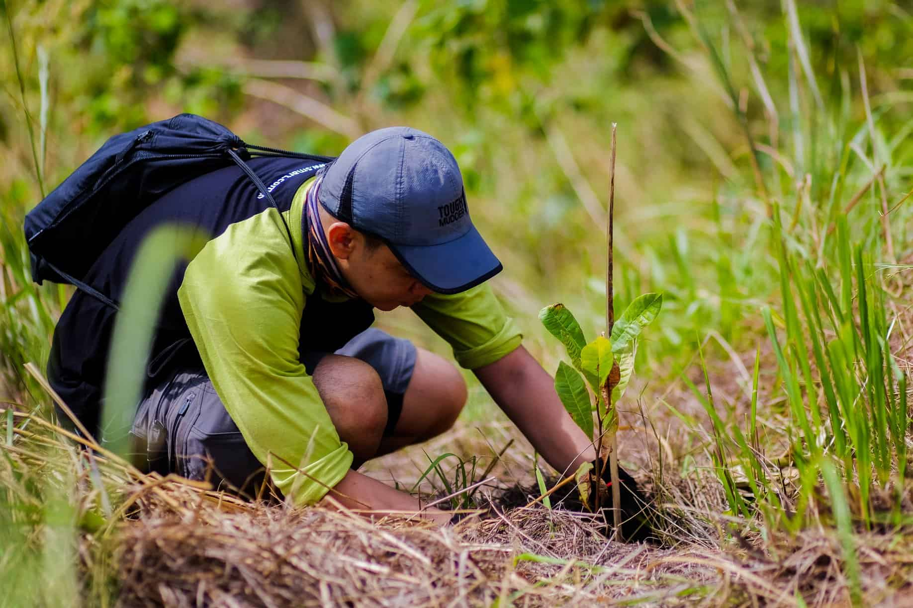 How to plan and succeed with your own reforestation project