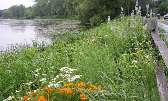 shoreline gardens -imagining