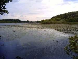 Regenwasser in der Natur