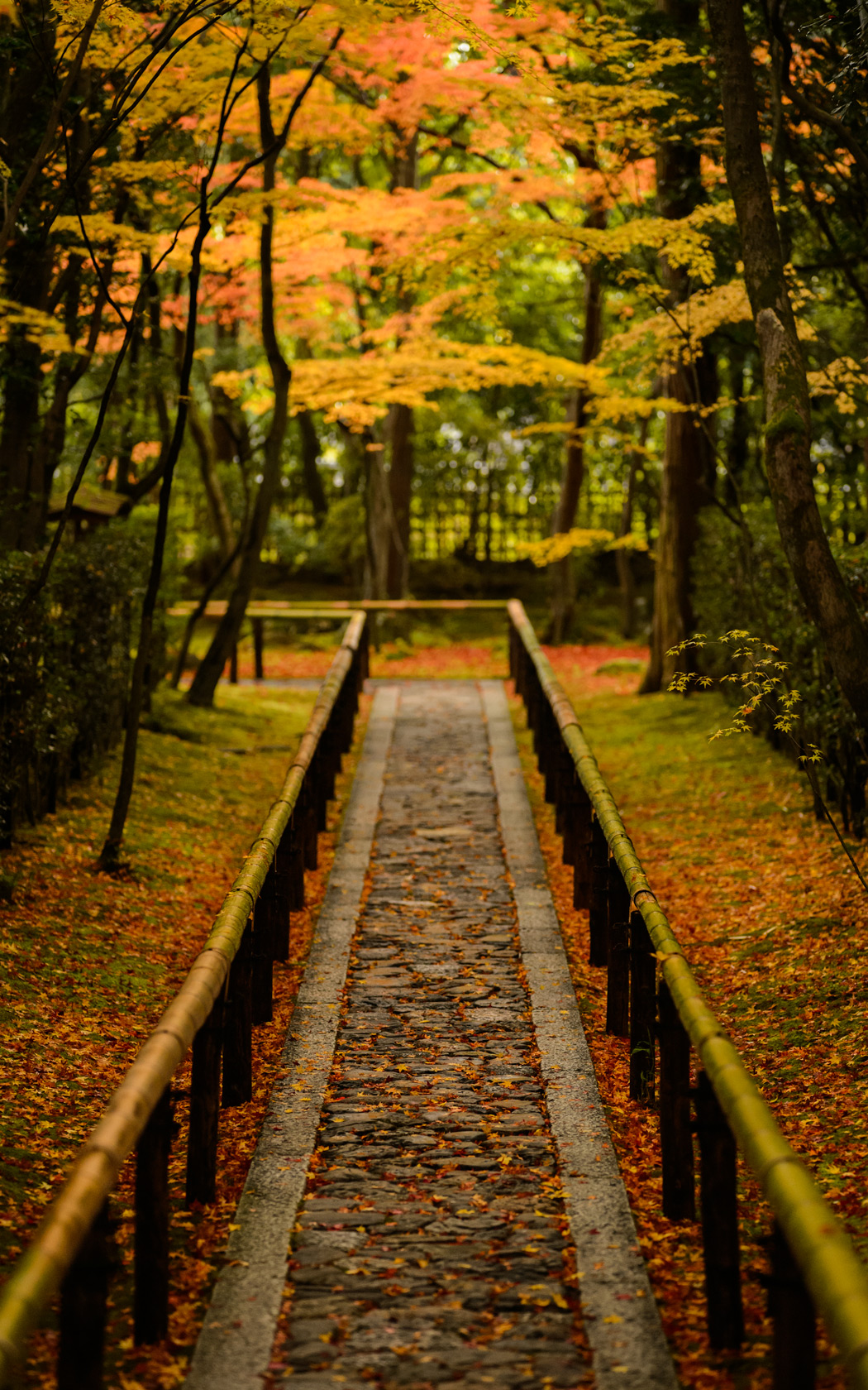 Free Wallpaper Fall Scenes Jeffrey Friedl S Blog 187 That Amazing Entrance Path Of