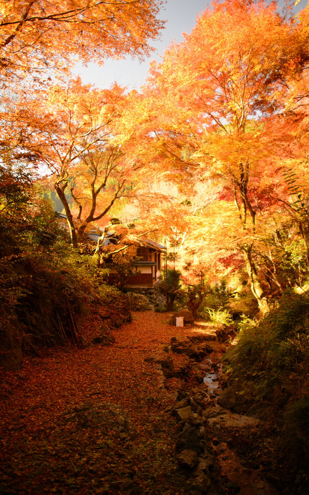 Free Country Fall Wallpaper Jeffrey Friedl S Blog 187 A Few Pretty Pictures From Kyoto S