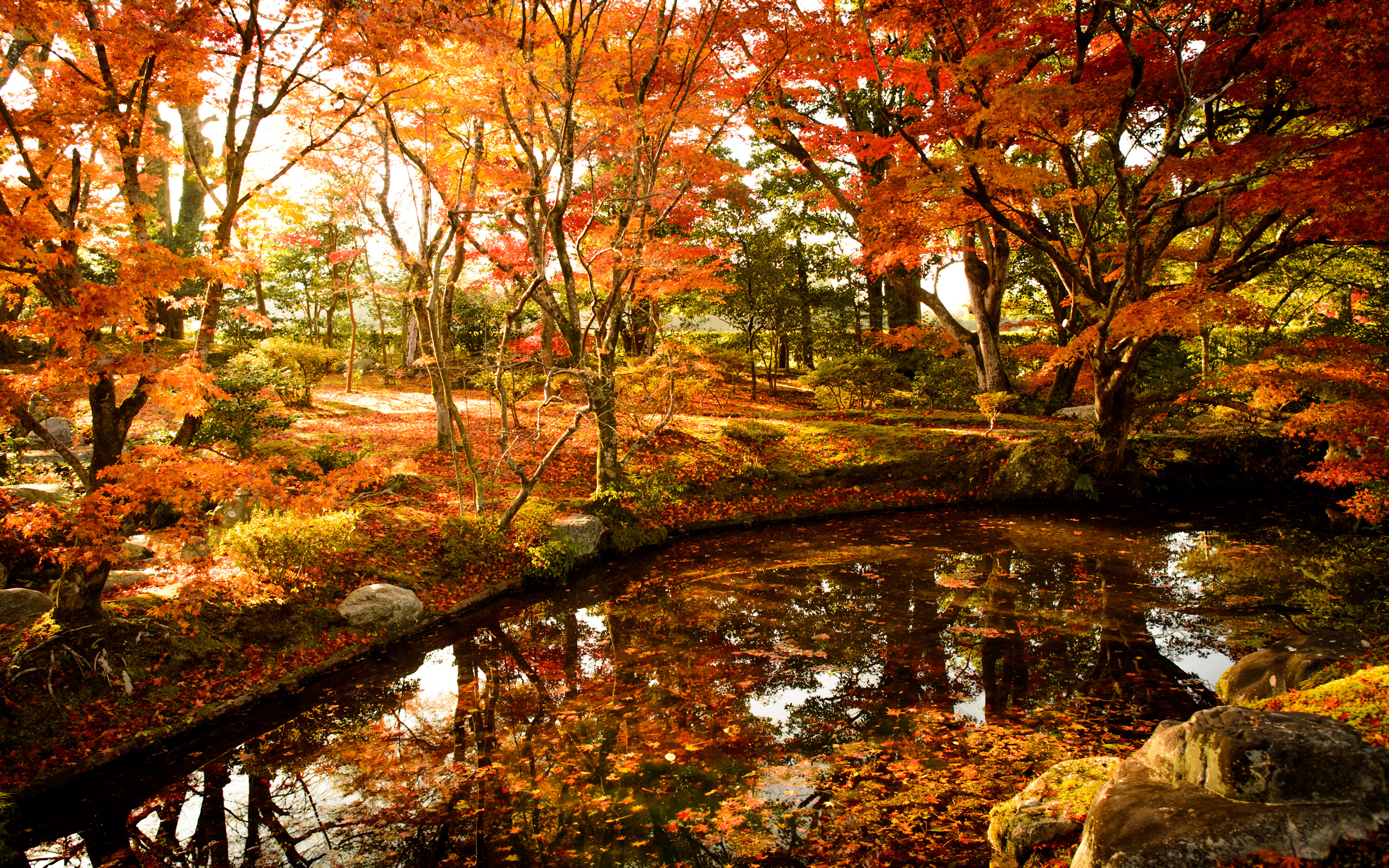 Fall Foliage Wallpaper For Computer Jeffrey Friedl S Blog 187 My First Visit To Kyoto S