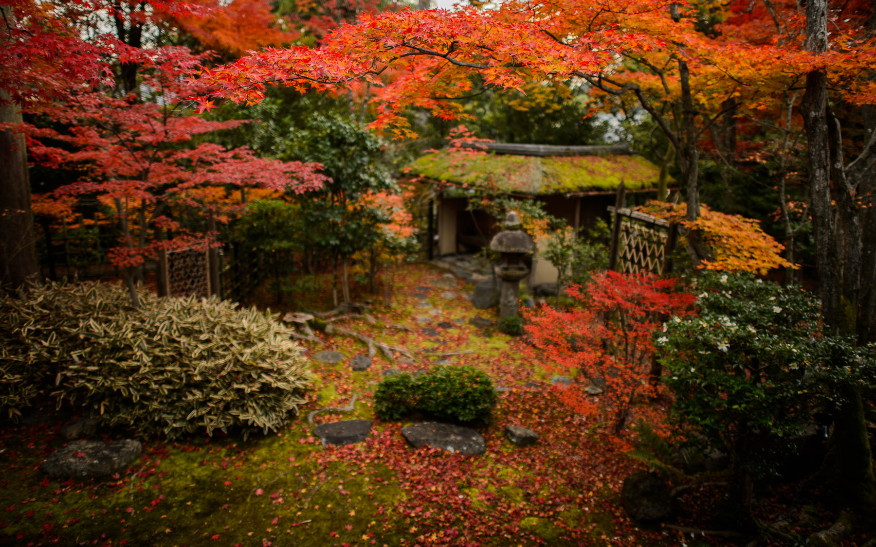 Jeffrey Friedl's Blog » Tea and Sweets Among the Fall Colors at Kyoto's Daihyouin Temple