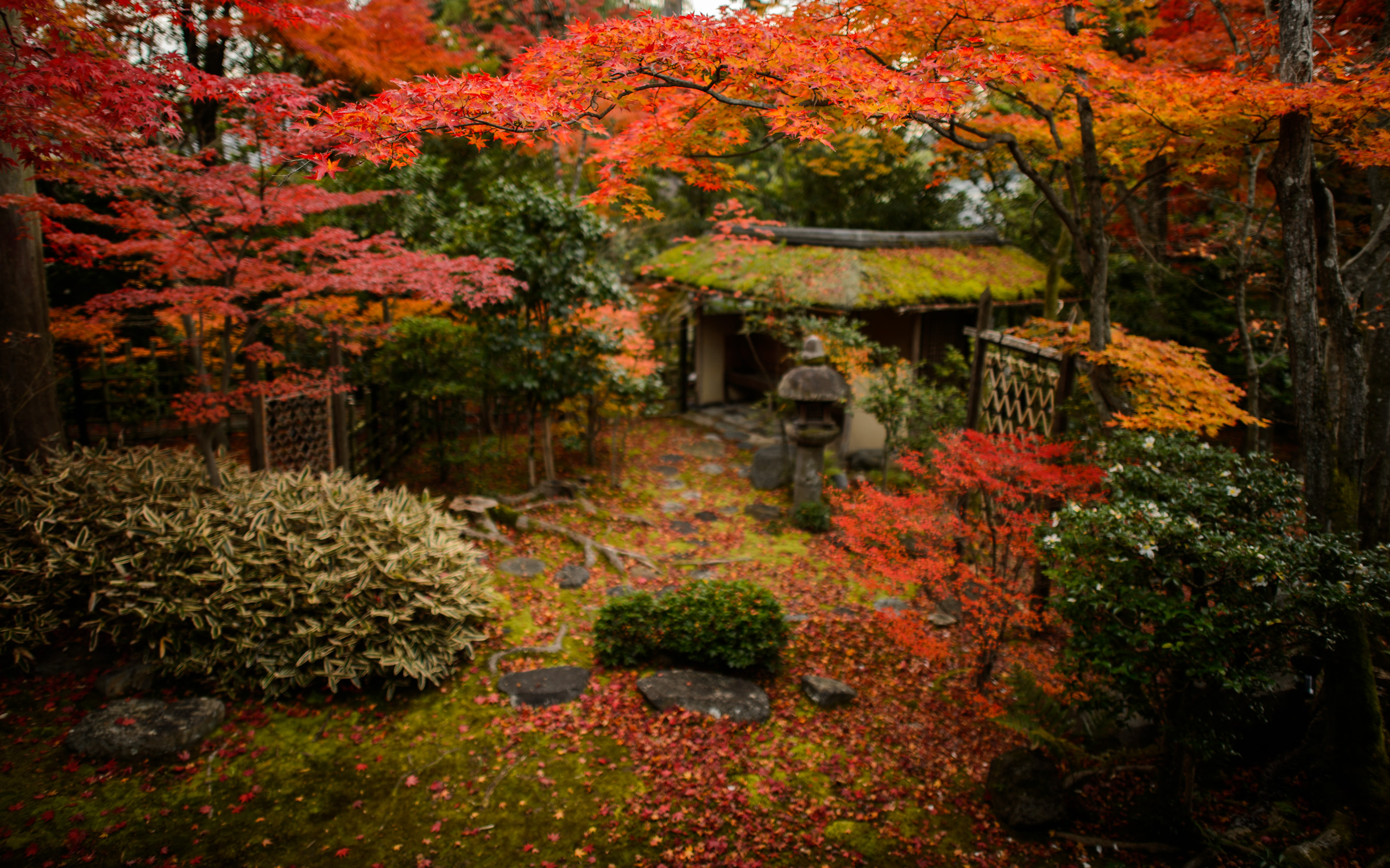 Japan Fall Colors Wallpaper Jeffrey Friedl S Blog 187 Tea And Sweets Among The Fall