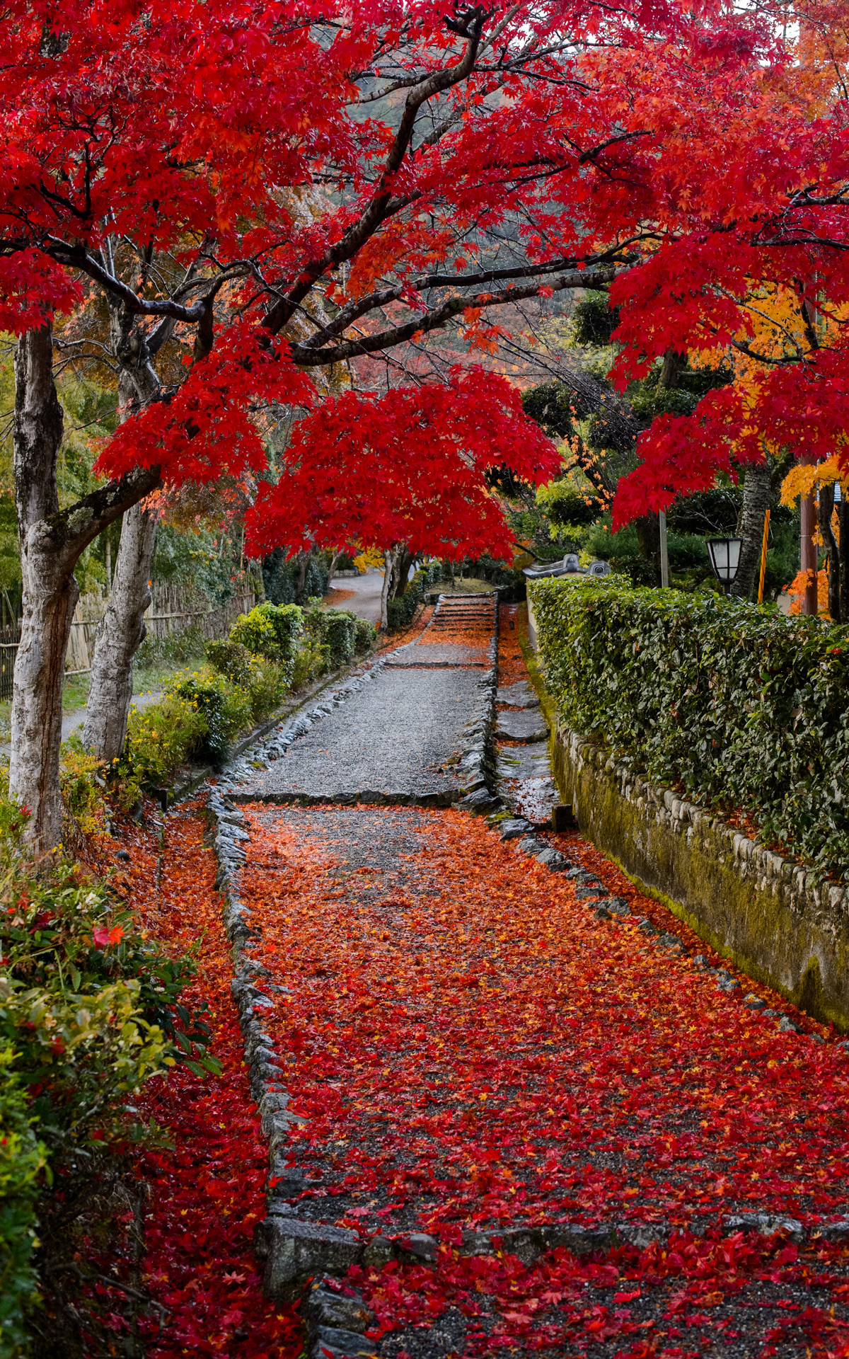 Beautiful Fall Scenes Wallpaper Jeffrey Friedl S Blog 187 Pretty And Colorful Public Path In