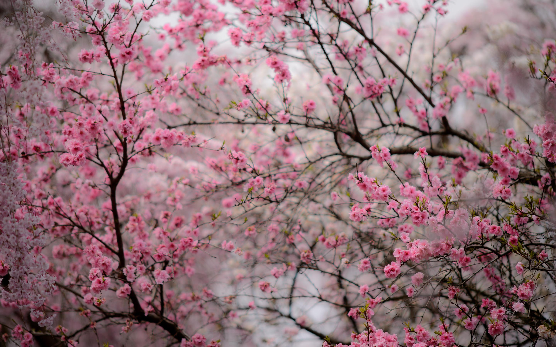 Falling Leaves Wallpaper Screensavers Jeffrey Friedl S Blog 187 Kyoto S Amazing Haradanien Garden