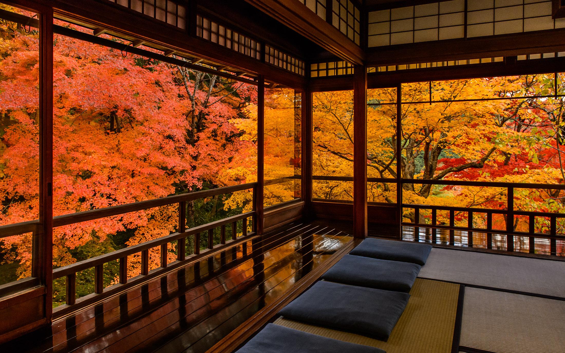 Fall Foliage Deskt Op Wallpaper Kyoto Photo Fall Colors From Inside Ruriko In Temple