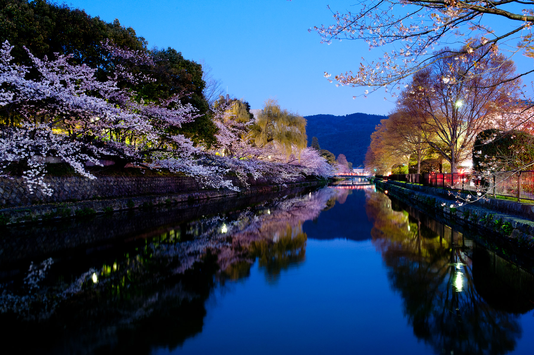 Jeffrey Friedl's Blog » The Hope of Cherry Blossoms in Japan