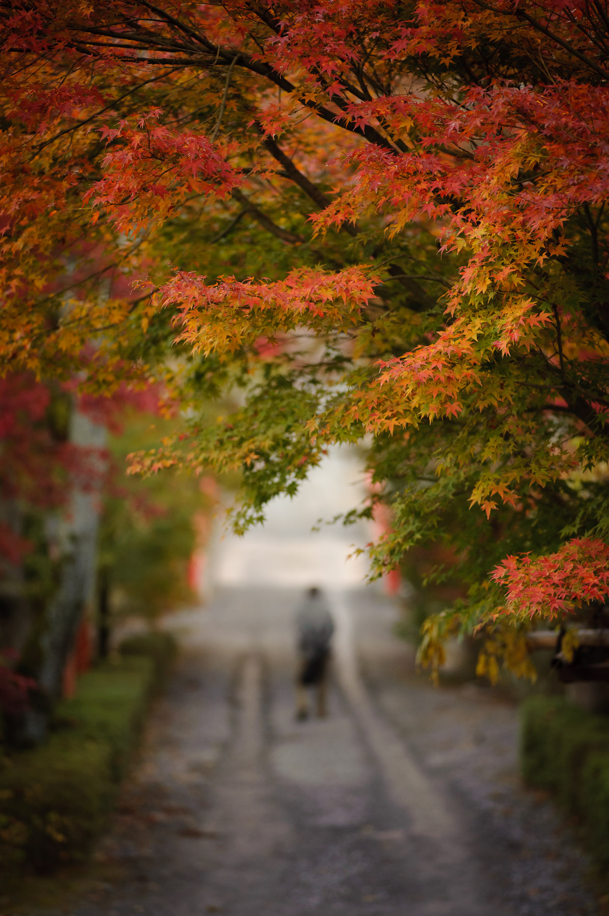 Late Fall Desktop Wallpaper Jeffrey Friedl S Blog 187 Another Amazing Trip To Kyoto S