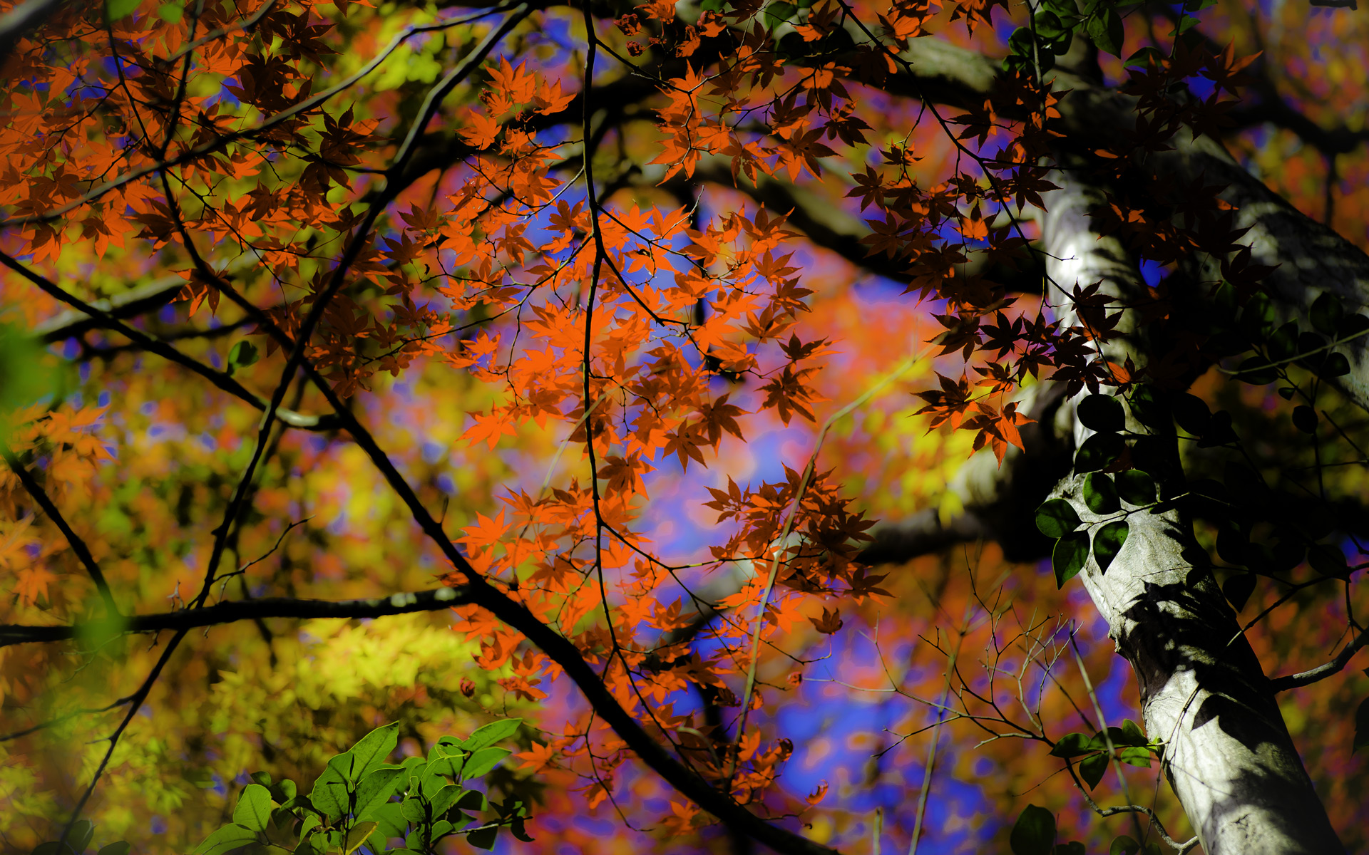 Fall Leaves Hd Wallpapers 1080p Jeffrey Friedl S Blog 187 Kyoto Fall Color Preview With