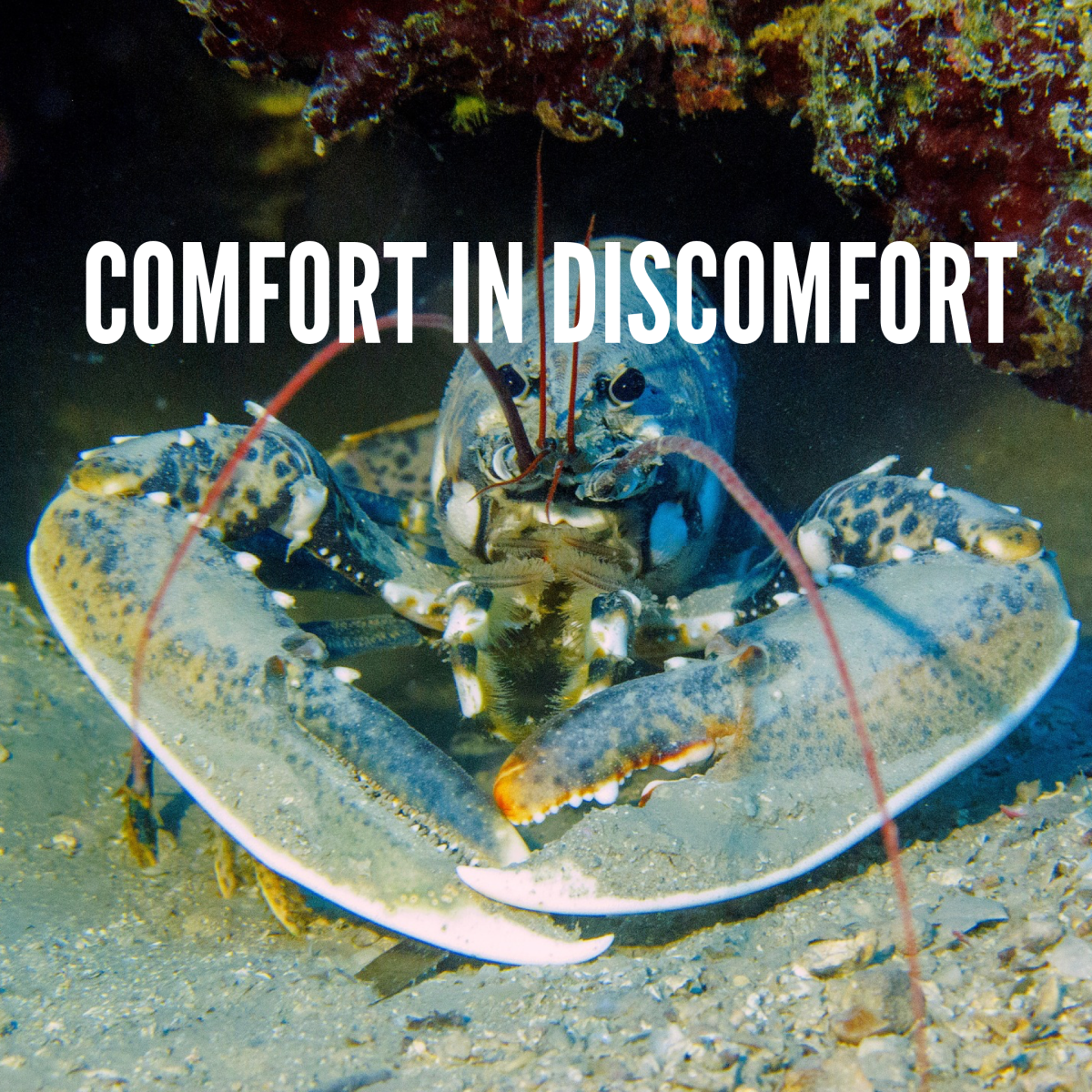 Comfort in Discomfort: Shin Splints, Karate and Lobsters