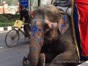 An elephant will do too