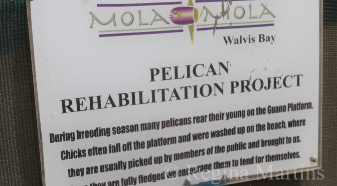 Pelican Rehabilitation Project
