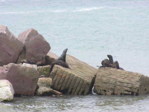 Seals sunning themselves at The Mole in Swakopmund