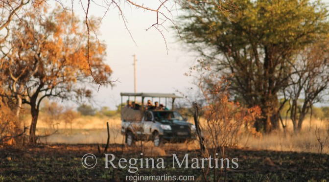 WordPress Weekly Photo: Blurry Bush Safari
