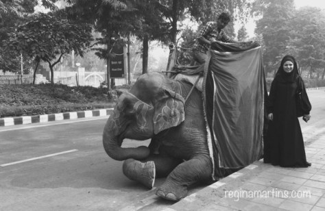 Elephant ride in Delhi ©2015 Regina Martins