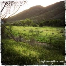 Pat Busch Mountain Reserve ©2015 Regina Martins