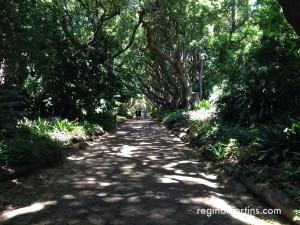 Dappled walkway at Kirstenbosch Botanical Gardens in Cape Town ©2016 Regina Martins