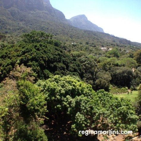 Looking out over the Kirstenbosch Botanical Gardens from the top of the Boomslang Tree Canopy Walkway  ©2016 Regina Martins