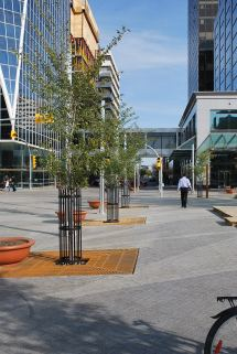 City Centre Square Regina Urban Ecology