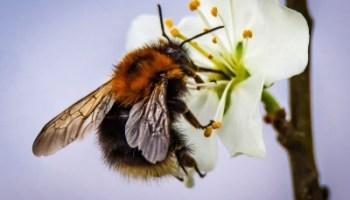aktueller stand rettet die bienen