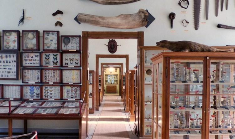 Enfilade Naturalienkabinett in Waldenburg