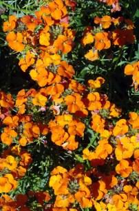 garden-sun-8-11