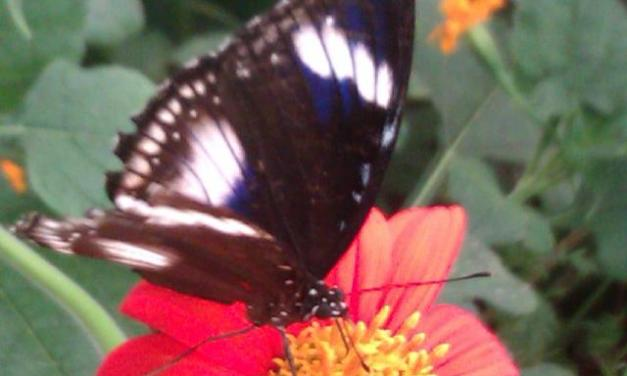 Le Carbet amazonien, la ferme aux Papillons