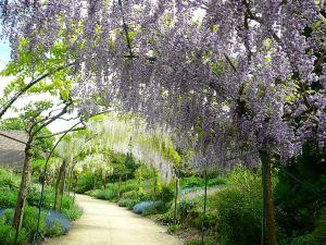 Parc Floral d'Apremont Glycine