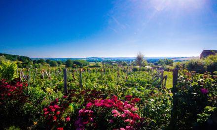 Alosnys, Le Village des saveurs et des savoirs