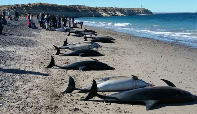 145 pilot whales dead in New Zealand mass stranding
