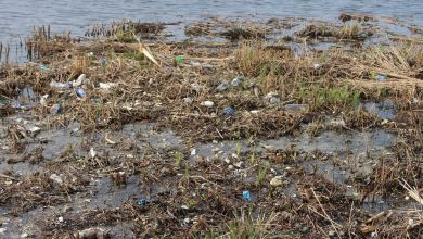Photo of Plastic soep bestreden in de Beemster (video)
