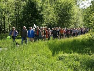 Seniorenwandeling (65+) in herfstsferen in het Purmerbos