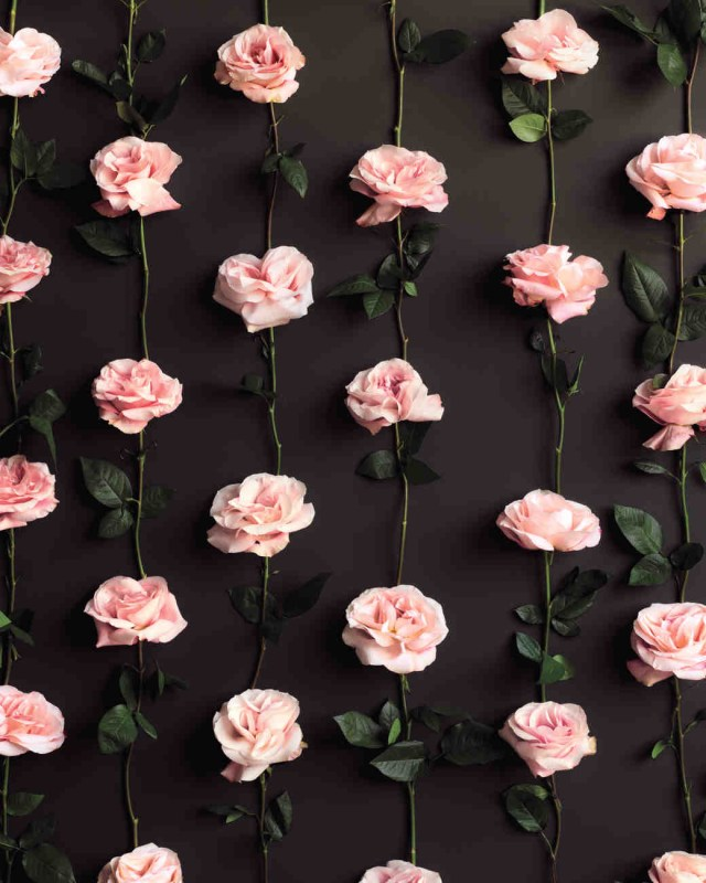 Wedding Backdrop Ideas 50 Stunning And Unique Wedding Backdrop Ideas Top5