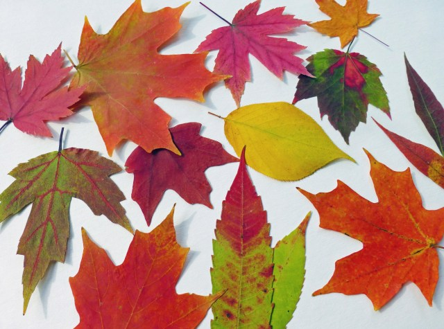 Wedding Decorations For Fall Autumn Leaves Qty 50 Fall Leaves Table Decorations Autumn