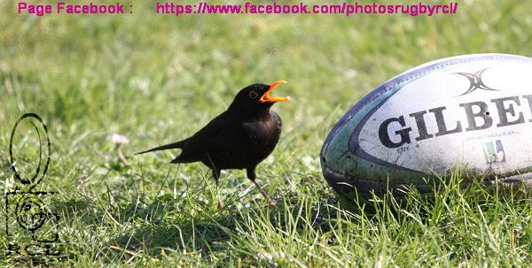 23-09-18 F3 Réserve Saint Nazaire Ovalie  contre XV Corsaire Saint Malo Rugby N° 06 Pica