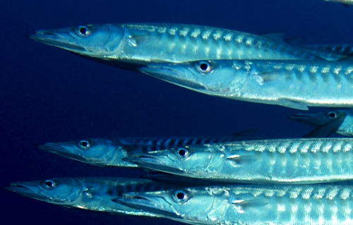 Hungry Barracuda Networks Gobbles A Profitable Quarter At