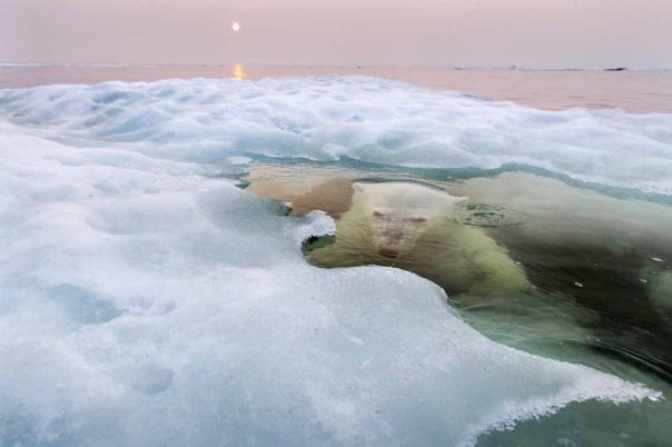 "Paul Souders, ""The Ice Bear"""