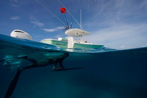 small resolution of regulator marine