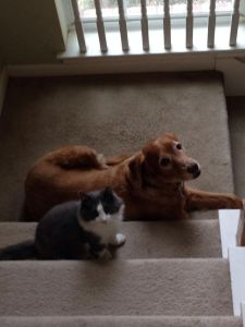Calvin cat and Lizzie Dog Together on Stairs Asking What You Need