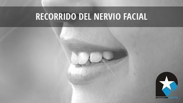 Recorrido del nervio facial - Rehabilitación Premium Madrid