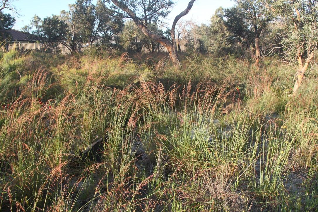 Image 10 - Veldt Grasss