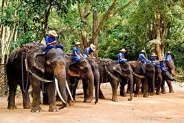 elephants ready for action