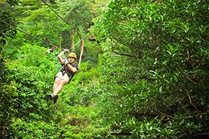 flight of the gibbon chiang mai