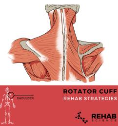rotator cuff diagram [ 1024 x 1024 Pixel ]