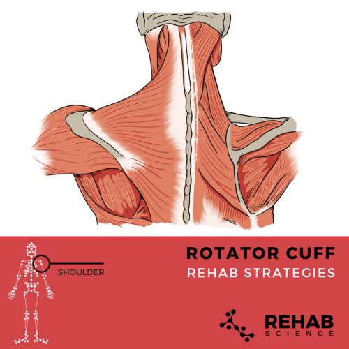 small resolution of rotator cuff diagram