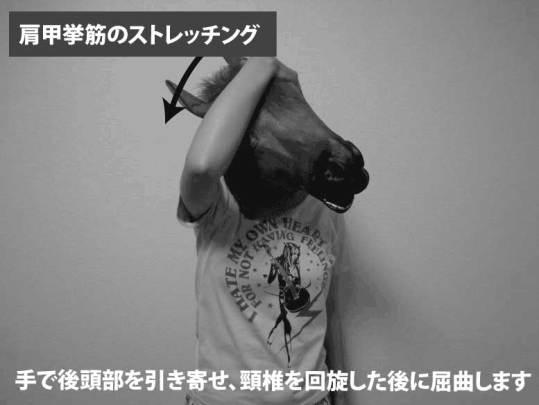 肩甲挙筋のストレッチング