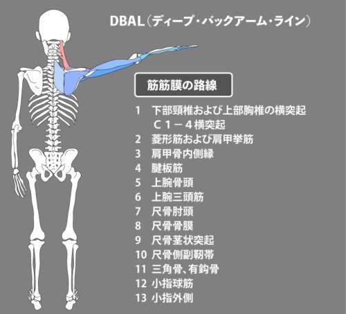 肩甲挙筋:筋膜:DBAL