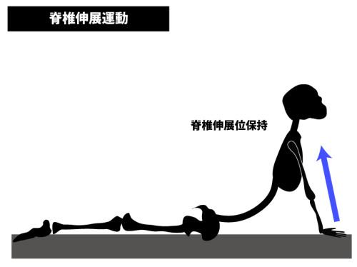 ストレッチ|脊椎伸展運動|腹直筋